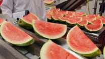 Watermelons inspected at Loffredo Fresh Produce, which is based in Des Moines.