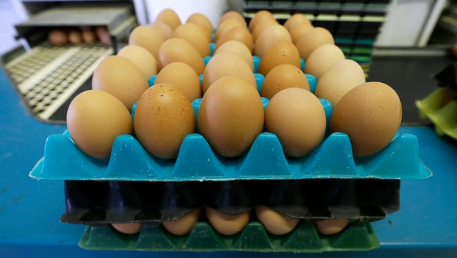 Eggs laid by cage-free chickens sit in a holder after being sorted at a farm near Waukon, Iowa.