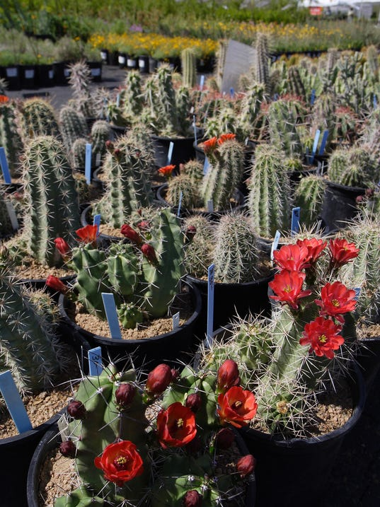Fall Brings Bounty Of Desert Adapted Plants For Sale