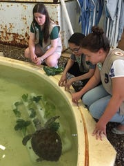 The girls refer to the turtle feeders as underwater