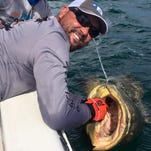 Tail Chaser Charter Services captain Chris O'Neill, a retired Army first sergeant, gets a goliath grouper into position to remove the hook.
