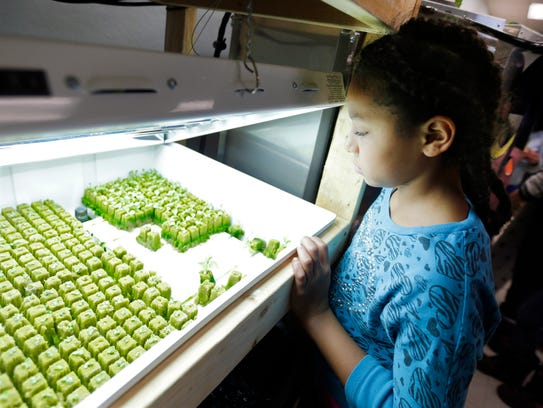 Student Makayla Linwood looks over seedlings that are