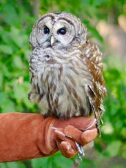 """See """"Owls Up Close"""" at Marsh Haven Nature Center on"""