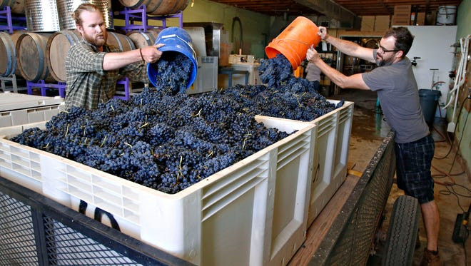 """Winery operations manager and """"Cellar Rat"""", Brad Swepson, l, and Rob Hammelman prepare  part of that morning's 3 ton grape haves for crushing at the Sand-Reckoner winery in Willcox."""