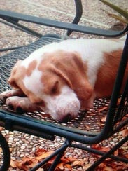 Bailey sleeps on the family's outdoor furniture as