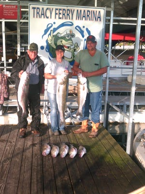 Dan, Jonie and Brian have fished Norfork Lake using spoons but wanted to try live bait. Started the day off slowly  but then started to hook and land the stripers.