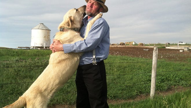 In this 2013 photo provided by the U.S. Department of Agriculture a Kangal dog greets Ben Hofer of the Hutterite Rockport Colony near Pendroy. Nearly 120 dogs from three large breeds were deployed to guard sheep in Idaho, Montana, Wyoming, Washington and Oregon.