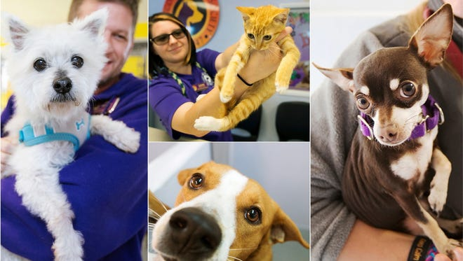 The Gulf Coast Humane Society in Fort Myers is hoping the New Year will bring more adoptions and support for the nonprofit organization that serves Southwest Florida.