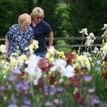 Iris City Gardens in Primm Springs, in Hickman County, grows more than 1,300 different plants, including over 900 irises, 250 day lilies, 130 peonies and many other perennials. Members of the FiftyForward College Grove Center will visit the gardens May 19.
