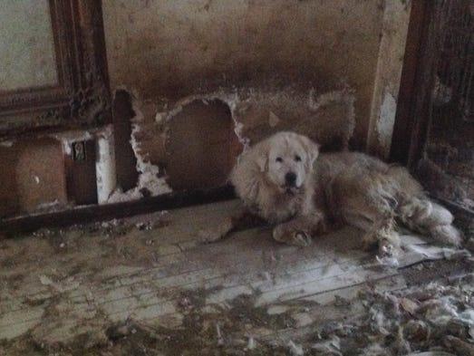 Tallahassee Animal - Pet Adoptions