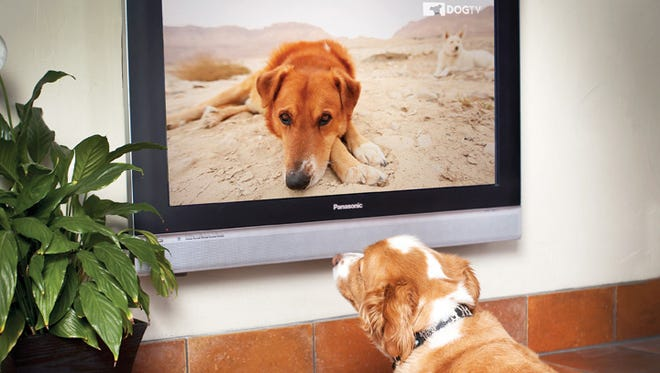Based on studies of what dogs see and hear, DOGTV is out to keep your dog company.