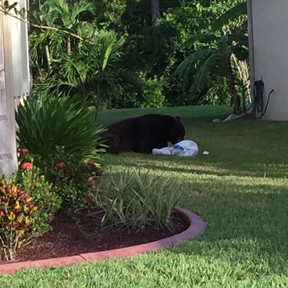 Glennis Liriano took this picture of the bear sitting