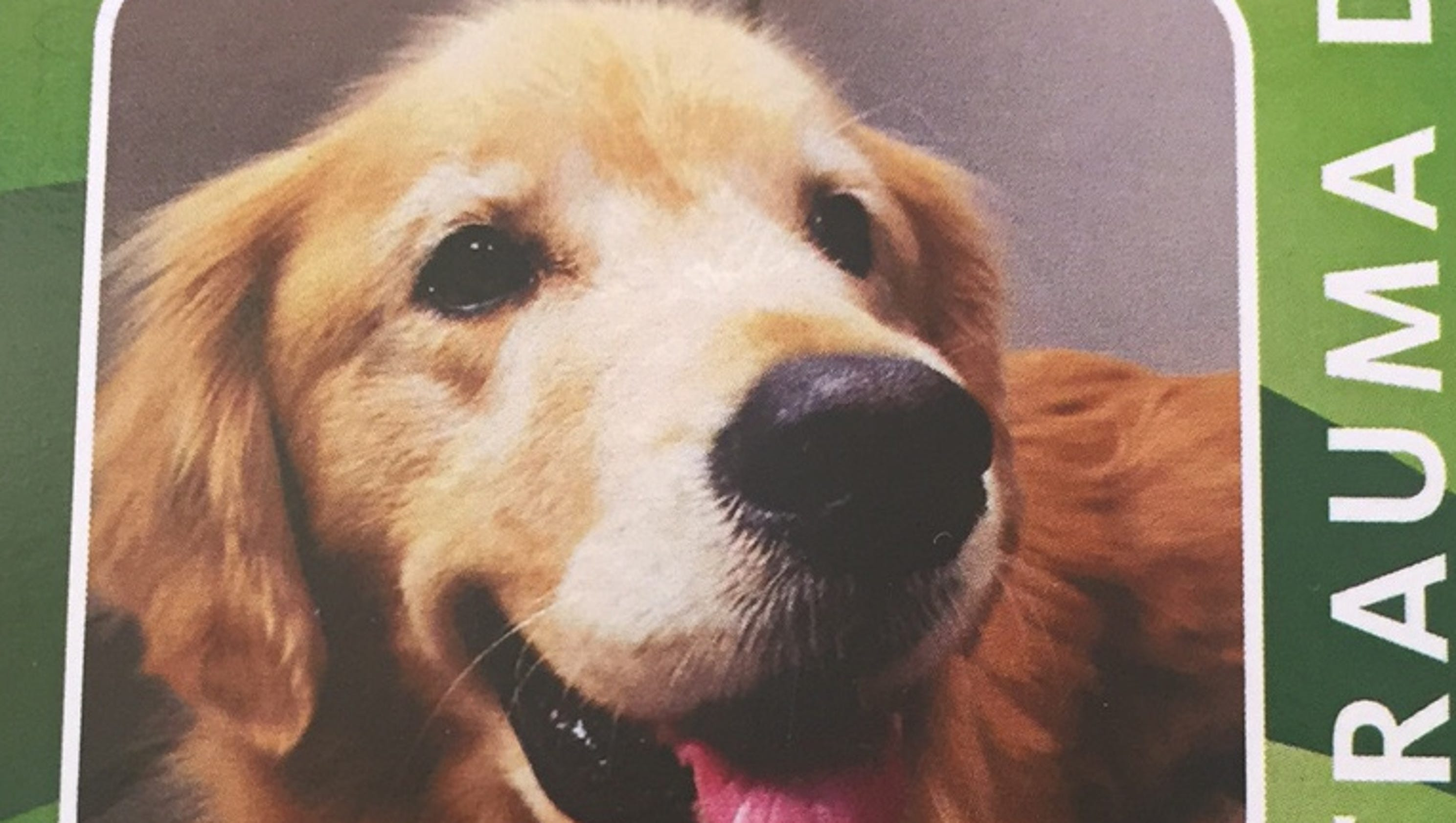 how to get a therapy dog in calgary