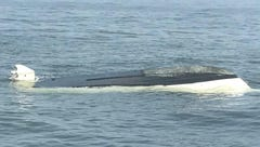 Whale capsizes boat, tossing 2 men into the sea. Police joke about charging the whale