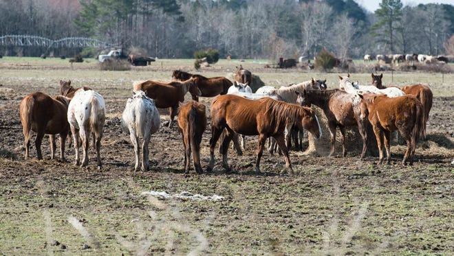 A view of a horse farm on Cherry Walk Road in Quantico on Monday, March 19, 2018.
