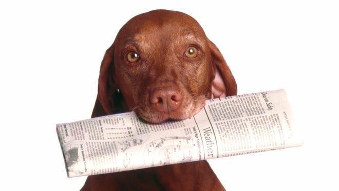 Dog holding newspaper in mouth