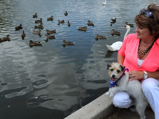 Cathy Westerman, with her dog Harley, noticed that some of the geese at Mallard Point in Hendersonville were plagued with angel wing.