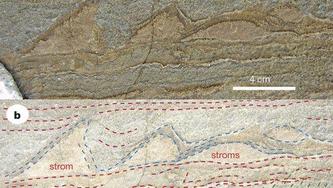 Part of the specimen of stromatolites found in Isua, Greenland.