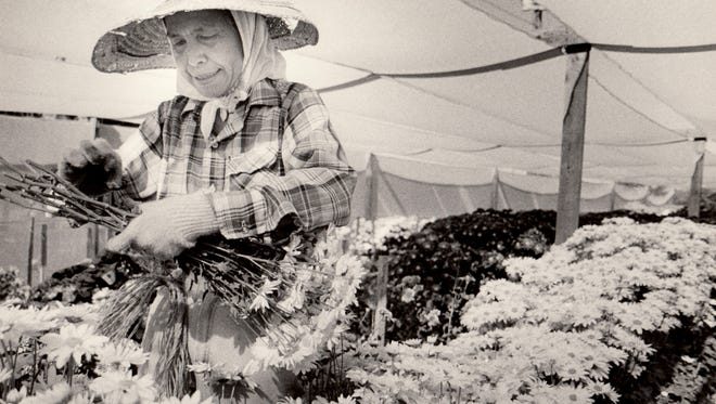 Yaeko Nakamura picks Chrysanthemums in the flower garden in November, 1986.  Republic File