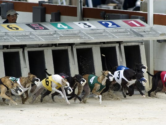 Greyhound Deaths Dwindle At Naples Fort Myers Track