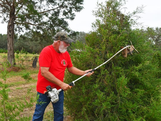 Jim Watson trims one of he trees on the farm. Jim and