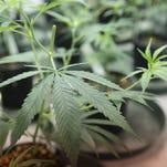 Port Hueneme starts crafting marijuana dispensary laws
