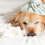Pet Talk: Protect your pet from canine influenza