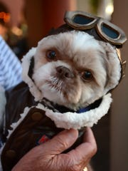 Chewie, a Shihtzu, and Norman Rameau came in matching WWI aviator outfits in 2016.