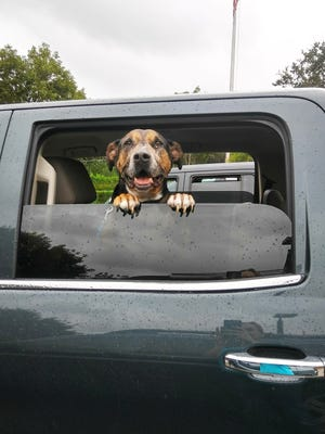 Nine-year-old Bo says goodbye to shelter staff as he leaves for his hurricane foster home.