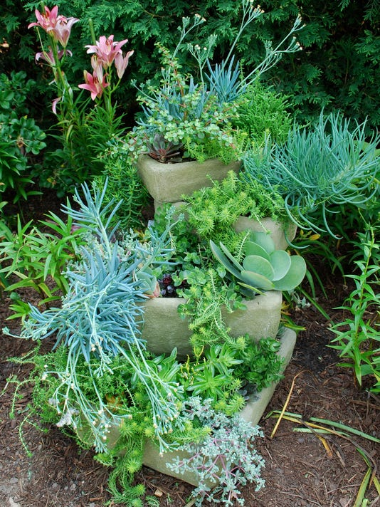 Succulents in stacked troughs.jpg
