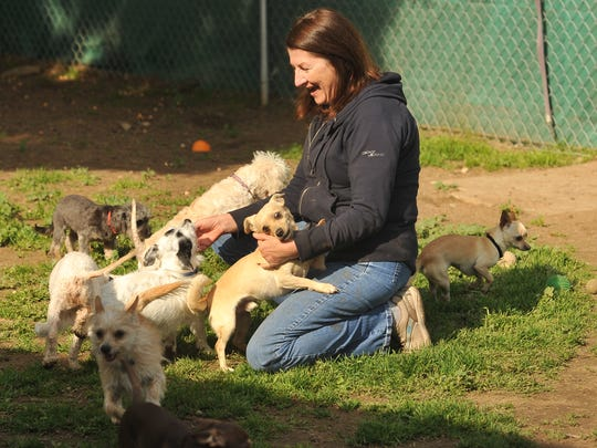 Central Valley Rescue Railroad volunteer Shirley Houser plays with dogs at the shelter in Lindsay on Feb. 12, 2016.