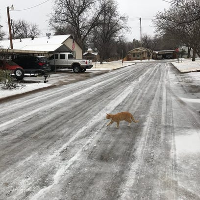 A cat crosses an iced-over Davis Drive on the morning