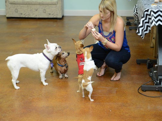 """Bark Avenue offers """"puppy pawties,"""" which give pups a chance to play and have special treats."""