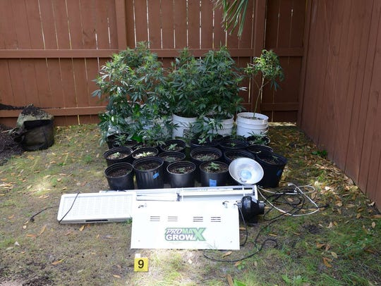 Indian River County deputies found a marijuana growing