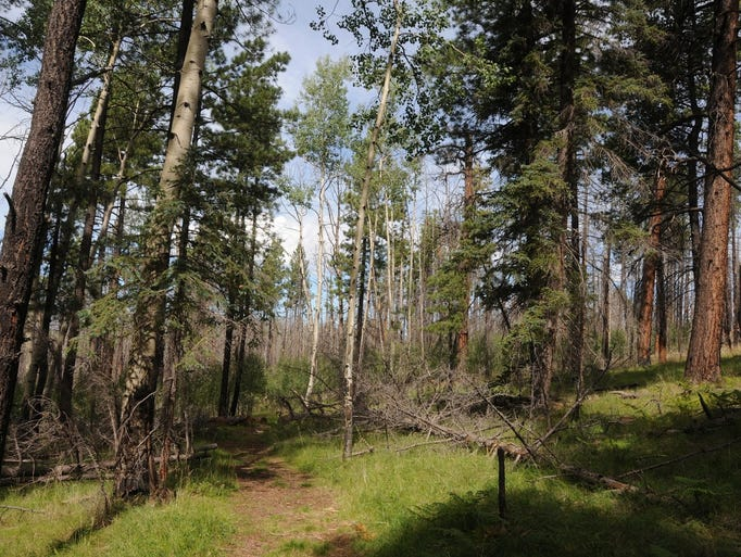 The Indian Springs Trail near Big Lake in the White