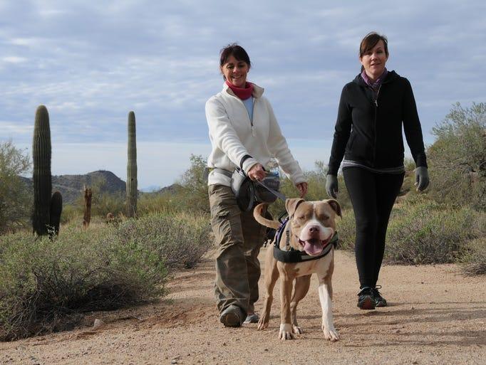 Dog Adoption Mesa Arizona