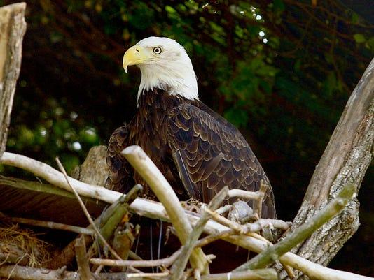 MNH 1212 Eagles
