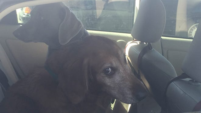 A 66-year-old Las Vegas woman was cited after leaving her six dogs inside a the car in a Palm Desert parking lot Wednesday afternoon.