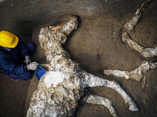 pompeii-horse-1
