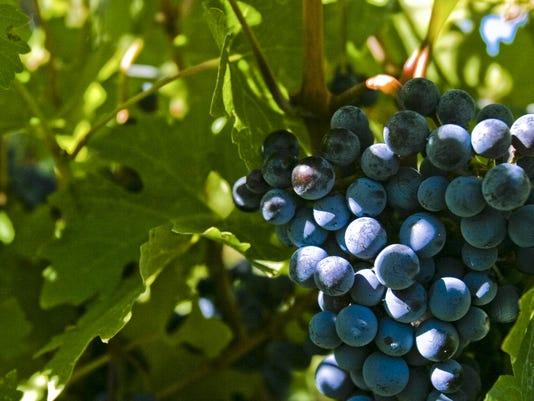 Wine_Master_Dinner_CSU.jpg