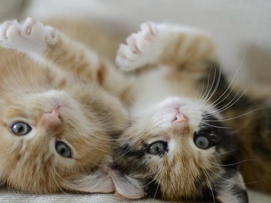 A bill pending in the state Legislature would ban declawing cats.