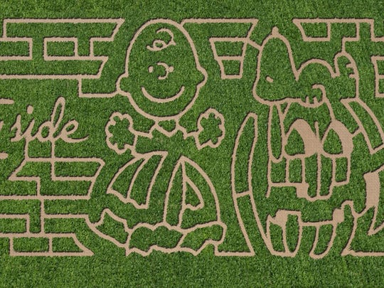 """The 7-acre Countryside Corn Maze celebrates the 50th anniversary of Charlie Brown's """"The Great Pumpkin."""" It is open on weekends from 10 a.m. to 5 p.m. through Nov. 20."""