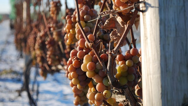 Grapes hang on the vine in the winter at Parallel 44 Vineyard & Winery in Kewaunee.