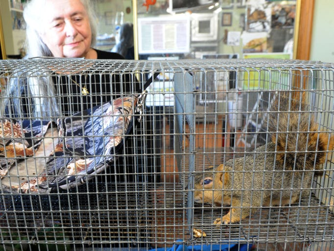 Sharron Baird takes care of a squirrel that has an