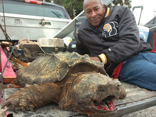 The Worlds Biggest Alligator Snapping Turtle