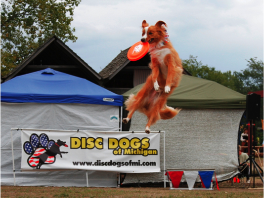 636639600153646299-Disc-Dogs-Jumping-Dog.png