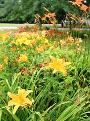 The garden of Peggy and Mitch Schoffner contains an enormous collection of colorful daylilies.