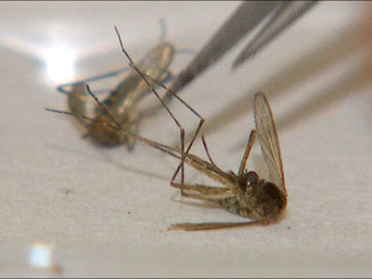 chikungunya.jpg