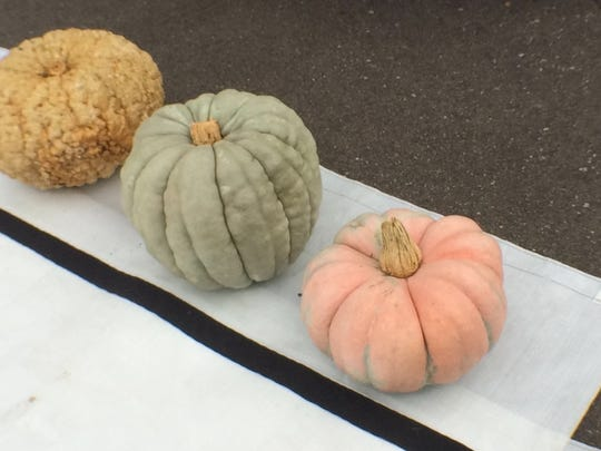 Unique, edible pumpkin varieties include acorn peanut, from left, jamboree and Rumbo hybrid.