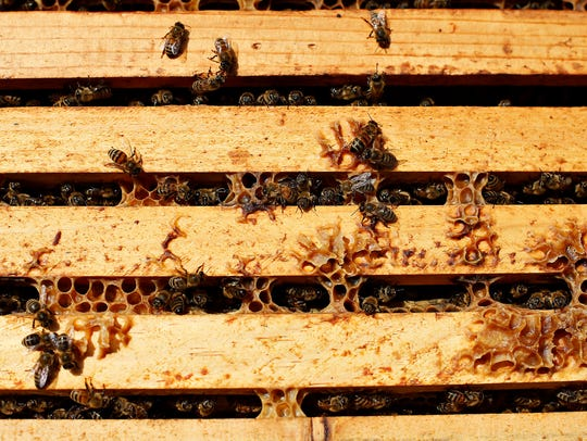 Bees come in and out of frames stacked together inside